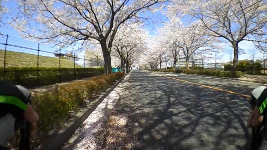 2017春 調布の桜 飛行場前