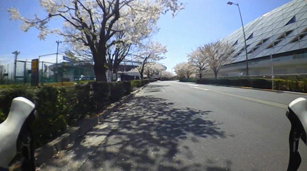 2017春 調布の桜 スタジアム通り